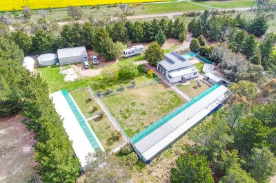 COVAINE KENNELS AND CATTERY
