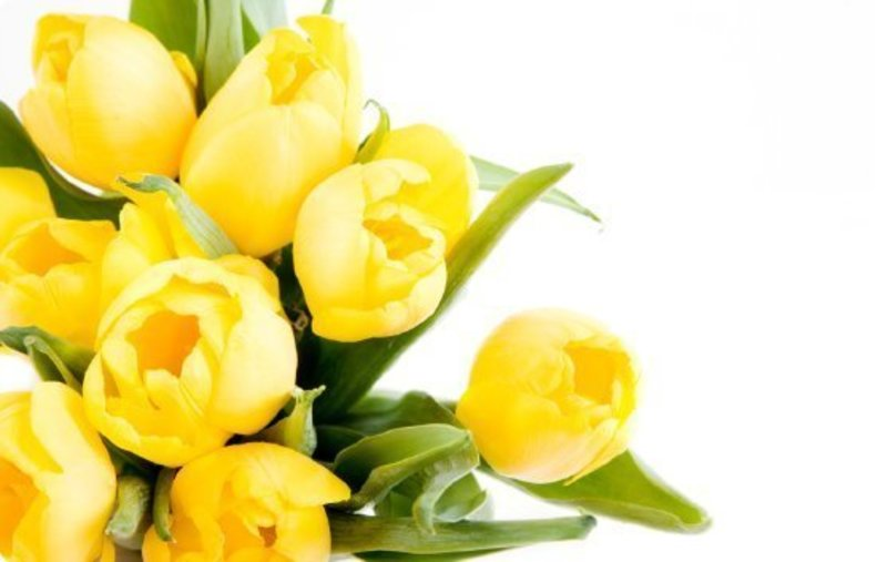 Business for Sale: Import and Wholesaler, Artificial flowers, short stem, silk and paper