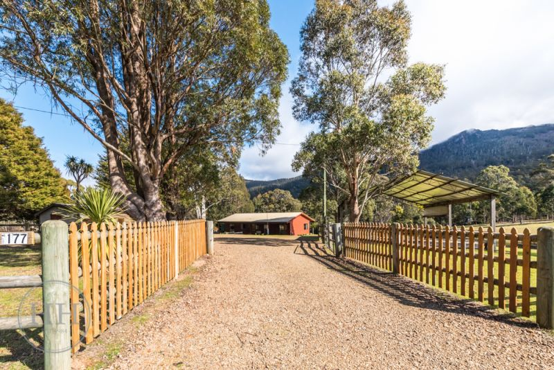 177 Mount Arthur Road-4