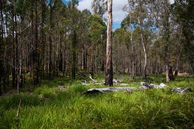 A unique natural opportunity in Hamilton Tasmania