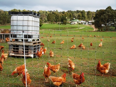 Is this the Farm You Want to Grow your Family and Children On?