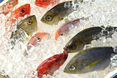 Amazing 5 Days Fresh Fish Shop near Northcote – Ref: 17731