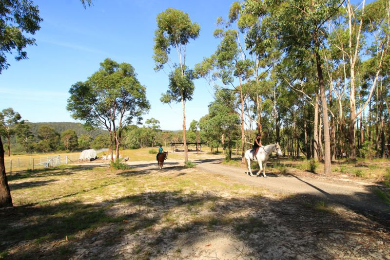 Equestrian property with large home, quality horse facilities and whisper quiet privacy.