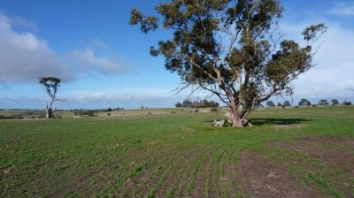 Vacant Land - A Great Opportunity Awaits    83.34 ha 206 Acres