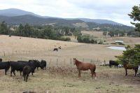 200 Bleases Lane Dixons Creek, Vic